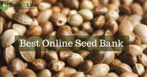 Best place to order weed seeds online