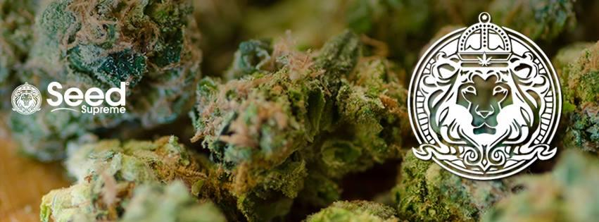 Where to get cannabis seeds in usa