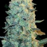 Auto perfect power plant seeds