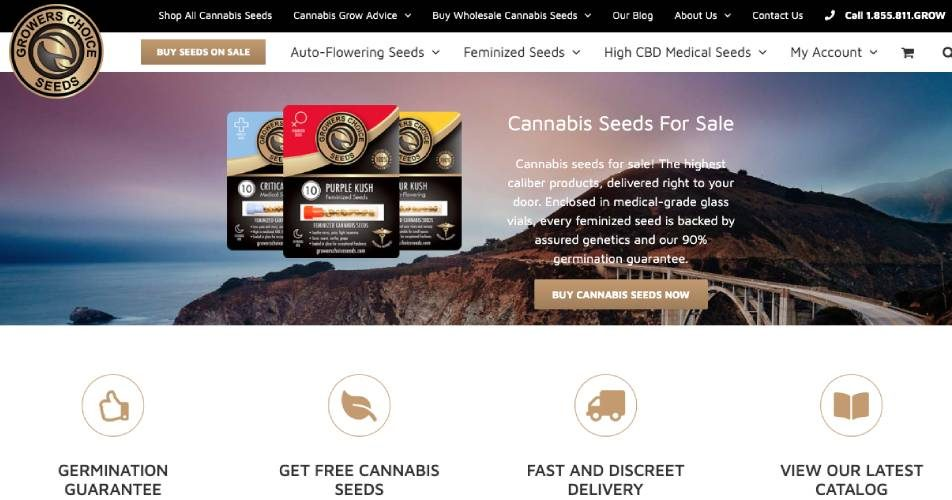 Top 10 best cannabis seed banks