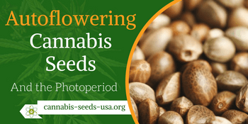 Cannabis seeds us