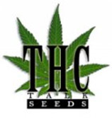 Team thctalk seeds