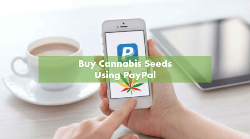 Buy cannabis seeds uk paypal