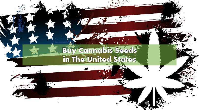 Can i buy marijuana seeds in the us
