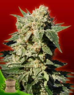 Cheap weed seeds canada