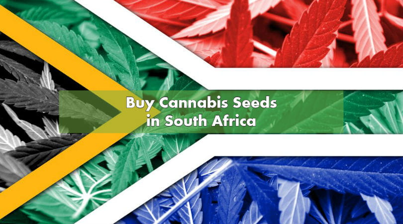 South african weed seeds
