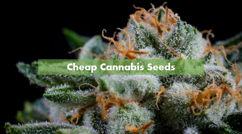 Weed seed cheap