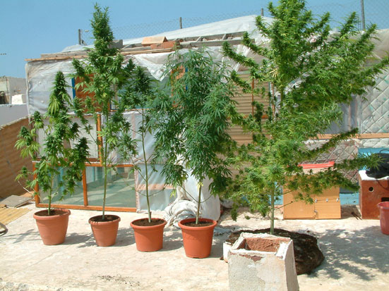 When is the best time to plant marijuana seeds