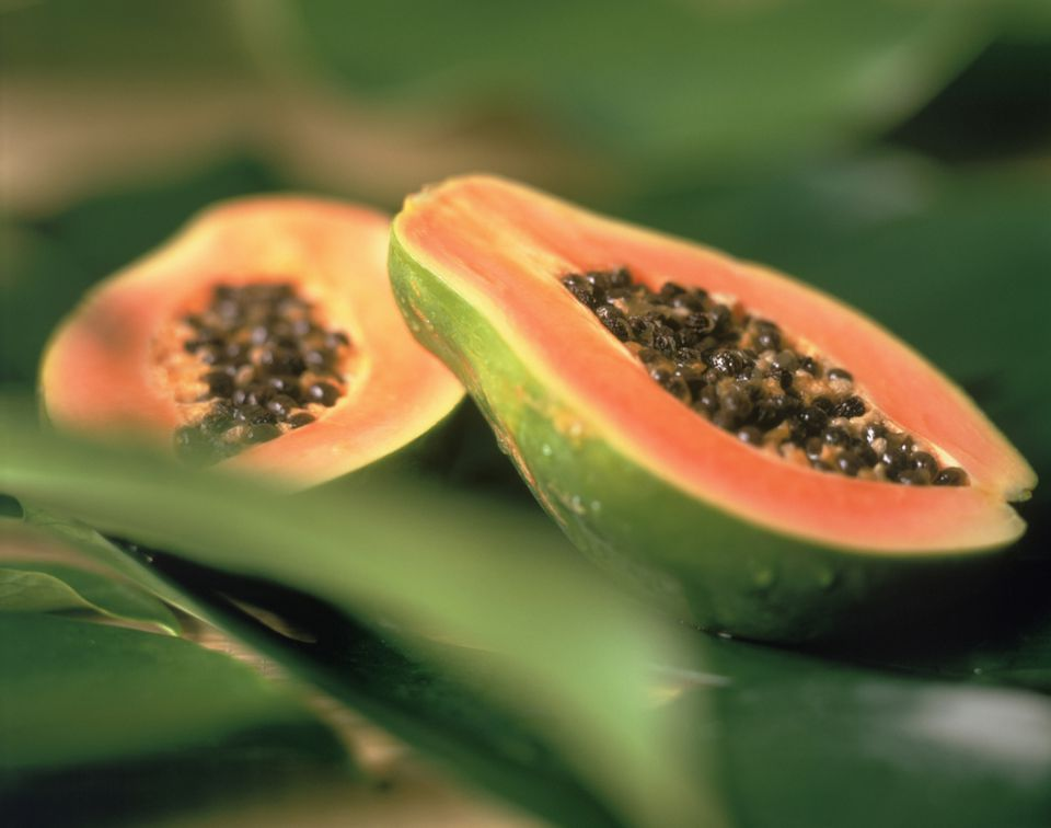 Growing papaya from seed in pots