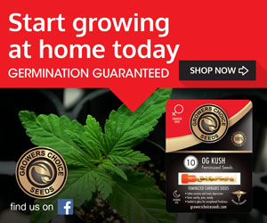 Where can you buy cannabis seeds in colorado