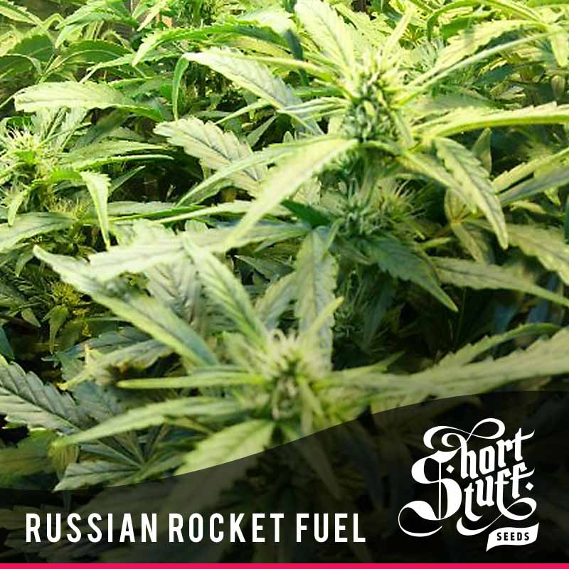 Russian rocket fuel seeds