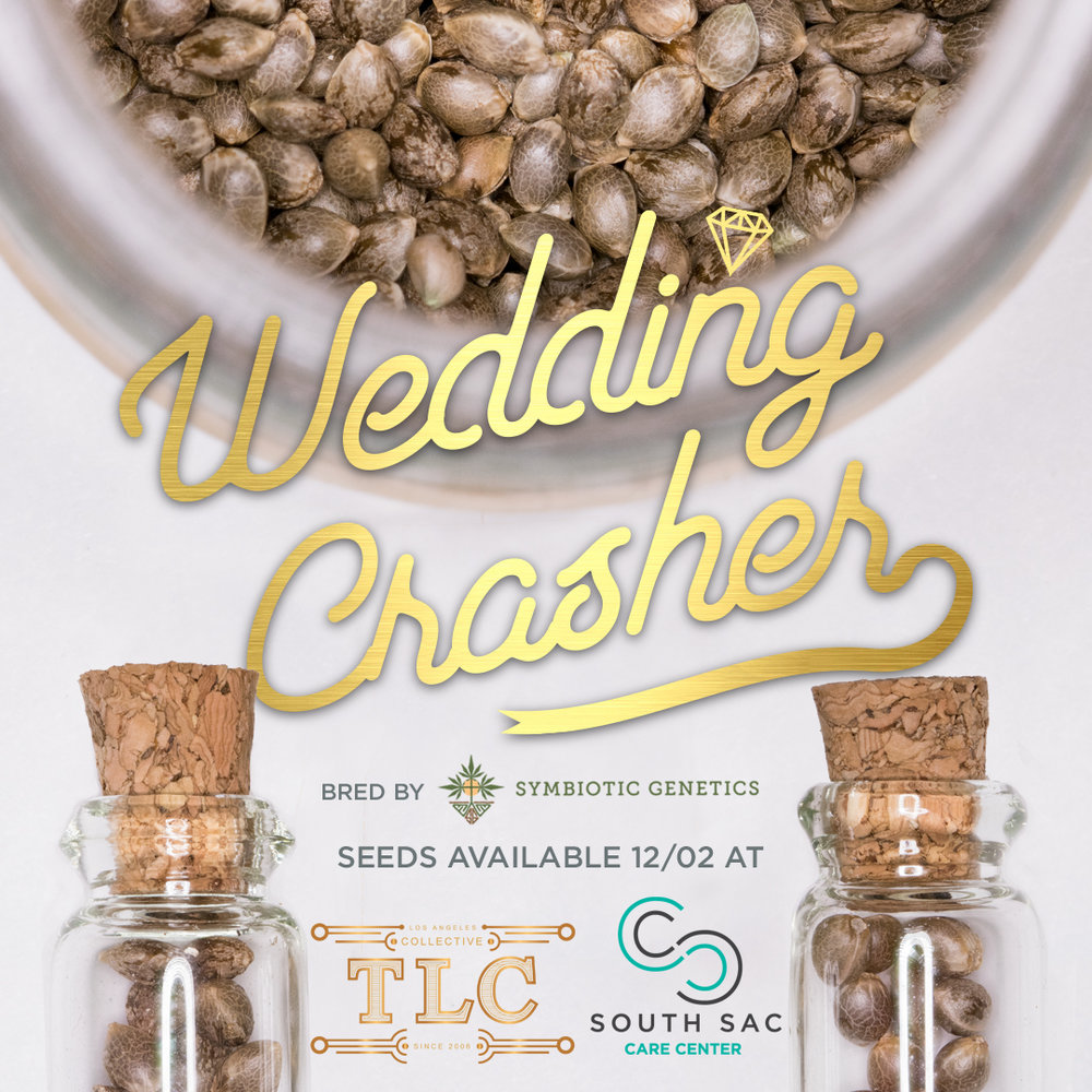 Wedding crasher seeds
