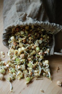 Hemp seeds for sprouting