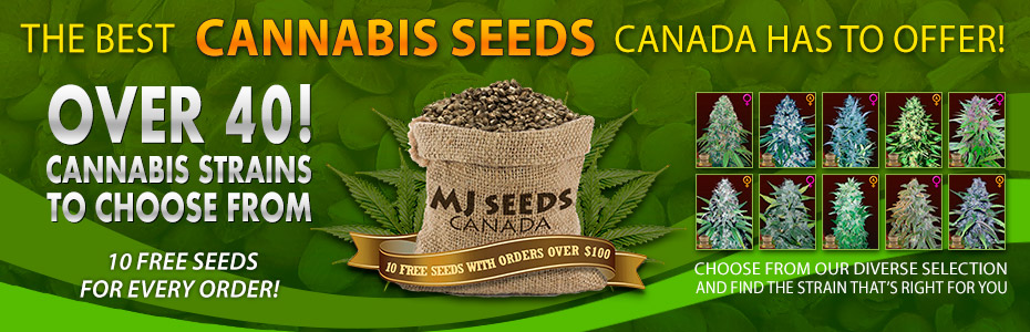 Weed seeds for sale in canada