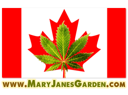 Outdoor marijuana seeds canada