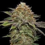 Bubba berry seeds