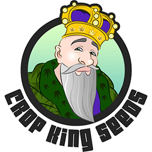 Cannabis king seeds for sale
